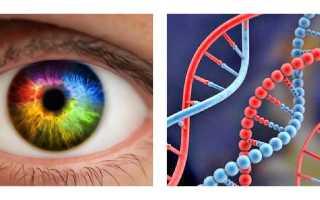 Как передается цвет кожи по наследству