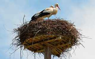 Какие птицы передают свои гнёзда по наследству